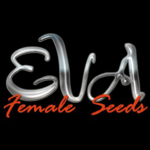 EVA FEMALE SEEDS