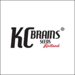 KC-BRAINS